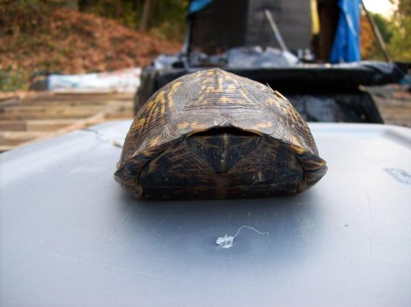 turtle-20081014-013
